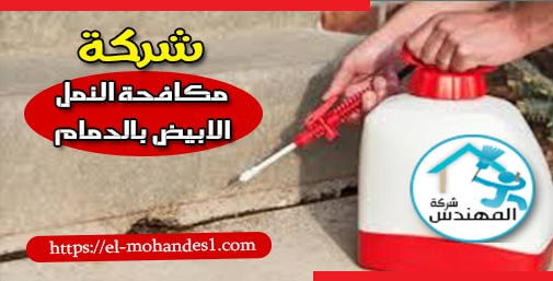 شركة مكافحة النمل الابيض بالدمام - شركة المهندس