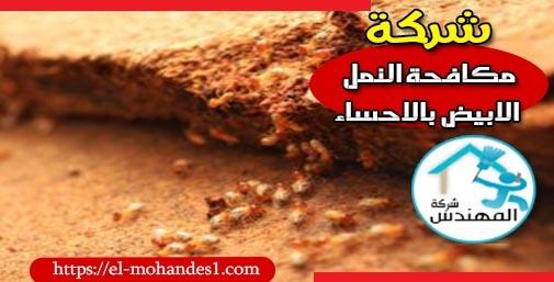 شركة مكافحة النمل الابيض بالاحساء - شركة المهندس