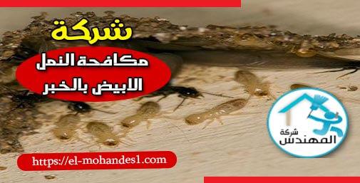 شركة مكافحة النمل الابيض بالخبر - شركة المهندس